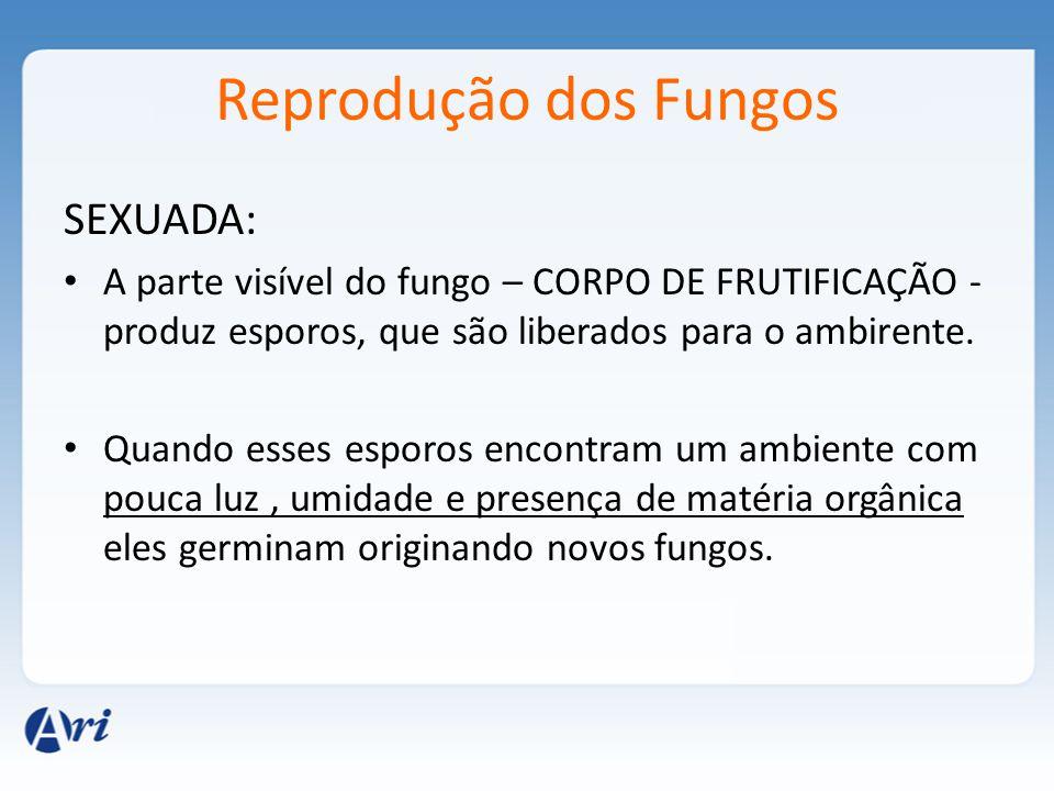 Reprodução dos Fungos SEXUADA: A parte visível do fungo – CORPO DE FRUTIFICAÇÃO - produz esporos, que são liberados para o ambirente. Quando esses esp
