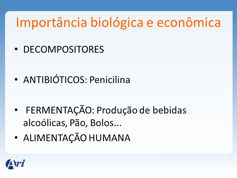 Importância biológica e econômica DECOMPOSITORES ANTIBIÓTICOS: Penicilina FERMENTAÇÃO: Produção de bebidas alcoólicas, Pão, Bolos... ALIMENTAÇÃO HUMAN