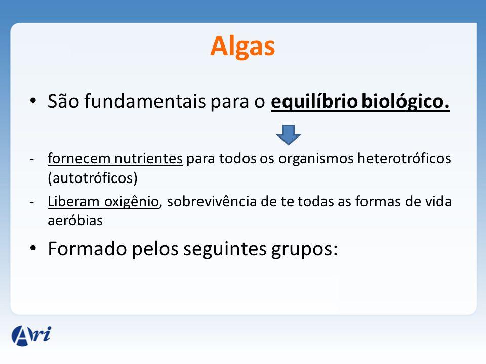 Algas São fundamentais para o equilíbrio biológico. -fornecem nutrientes para todos os organismos heterotróficos (autotróficos) -Liberam oxigênio, sob