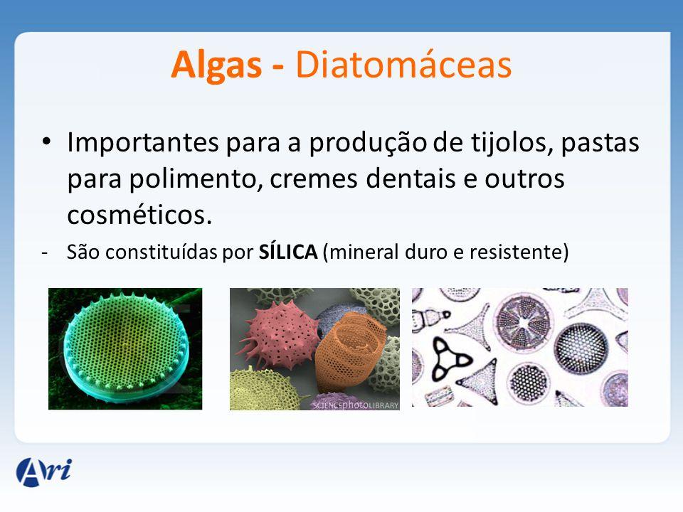 Algas - Diatomáceas Importantes para a produção de tijolos, pastas para polimento, cremes dentais e outros cosméticos. -São constituídas por SÍLICA (m