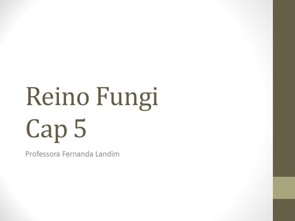 Reino Fungi Cap 5 Professora Fernanda Landim