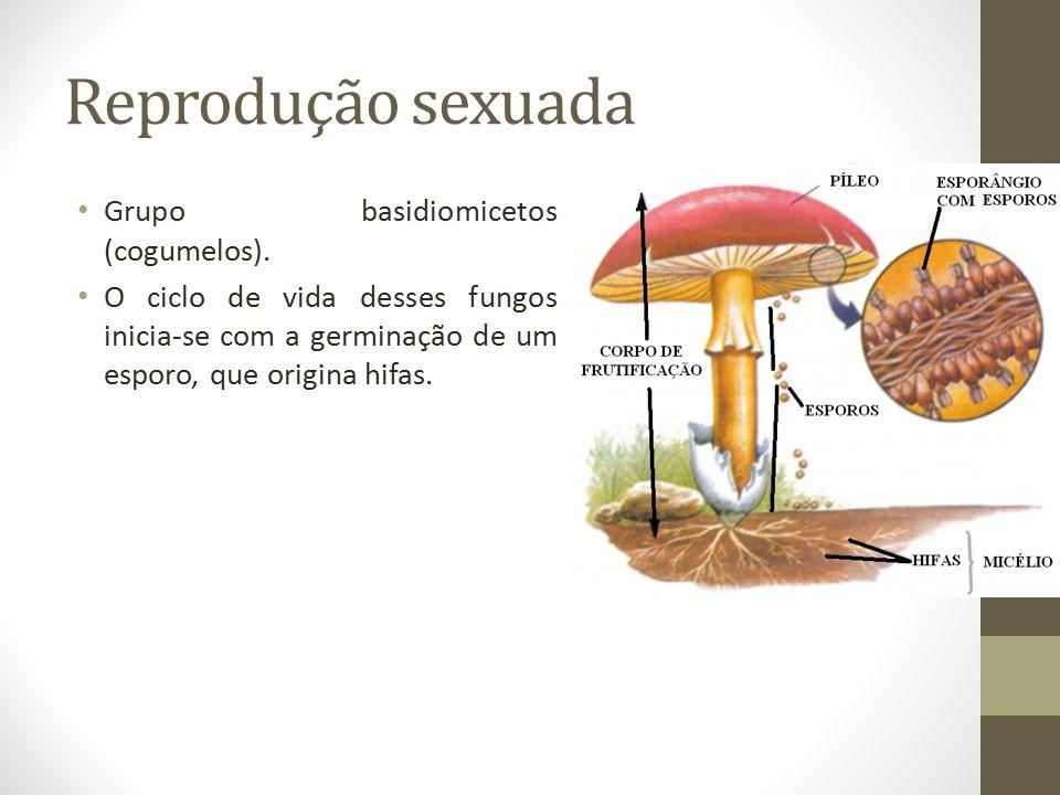 Reprodução sexuada Grupo basidiomicetos (cogumelos). O ciclo de vida desses fungos inicia-se com a germinação de um esporo, que origina hifas.
