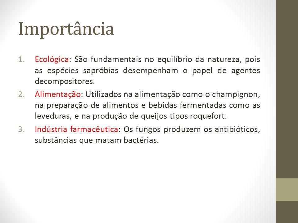Importância 1.Ecológica: São fundamentais no equilíbrio da natureza, pois as espécies sapróbias desempenham o papel de agentes decompositores. 2.Alime