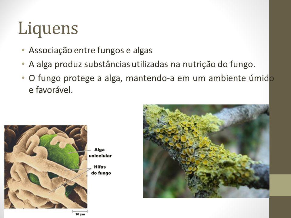 Liquens Associação entre fungos e algas A alga produz substâncias utilizadas na nutrição do fungo. O fungo protege a alga, mantendo-a em um ambiente ú