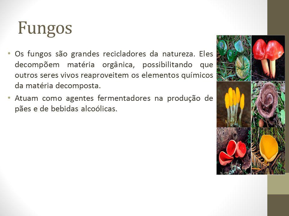 Fungos Os fungos são grandes recicladores da natureza. Eles decompõem matéria orgânica, possibilitando que outros seres vivos reaproveitem os elemento