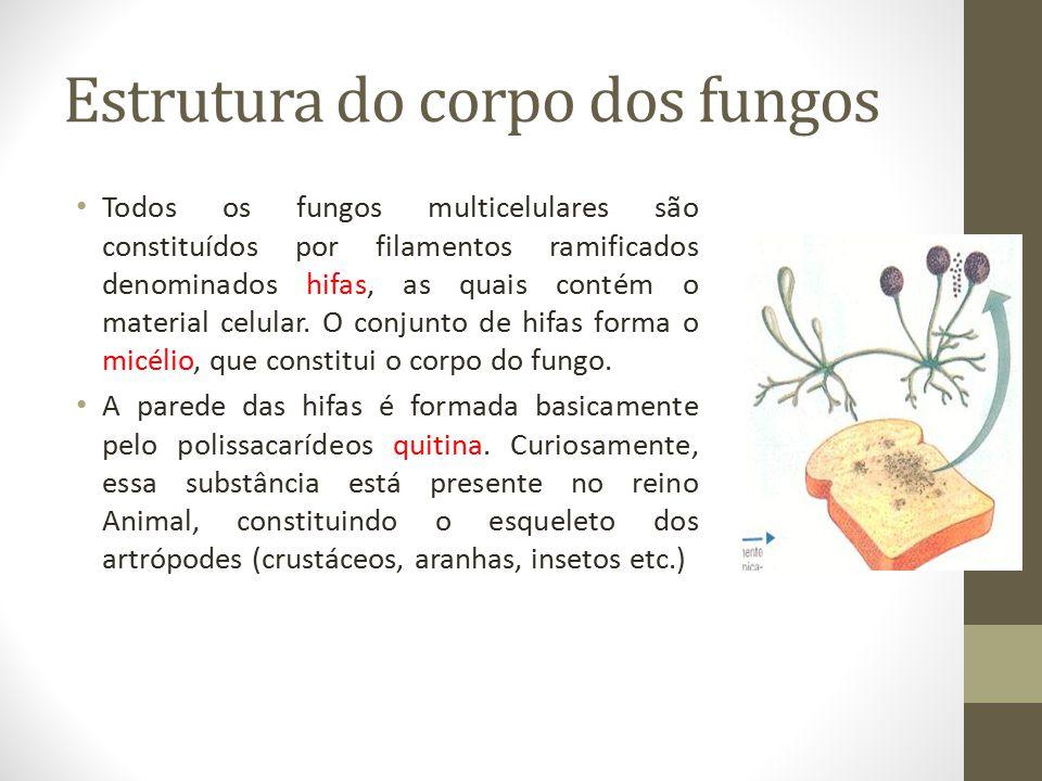 Estrutura do corpo dos fungos Todos os fungos multicelulares são constituídos por filamentos ramificados denominados hifas, as quais contém o material
