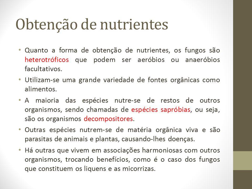 Obtenção de nutrientes Quanto a forma de obtenção de nutrientes, os fungos são heterotróficos que podem ser aeróbios ou anaeróbios facultativos. Utili
