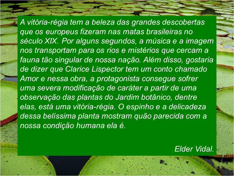 Vitória-Régia da Amazônia