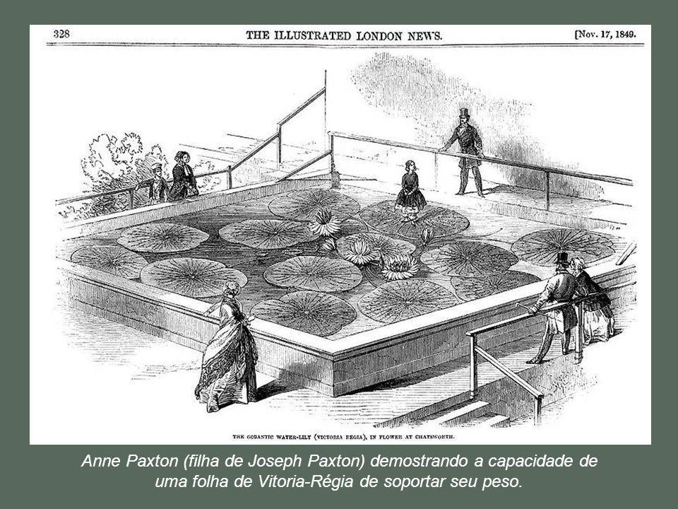 As várias tentativas, do jardineiro do Duque de Devonshire, Joseph Paxton, em novembro de 1849 foi o primeiro a conseguir uma réplica do habitat quent