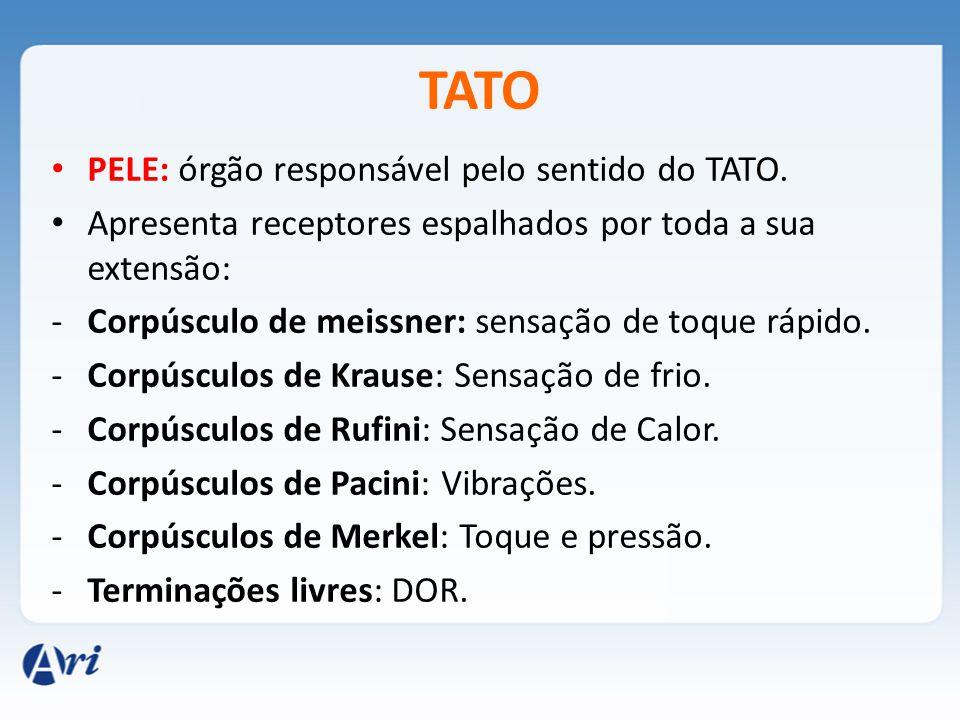 TATO PELE: órgão responsável pelo sentido do TATO. Apresenta receptores espalhados por toda a sua extensão: -Corpúsculo de meissner: sensação de toque