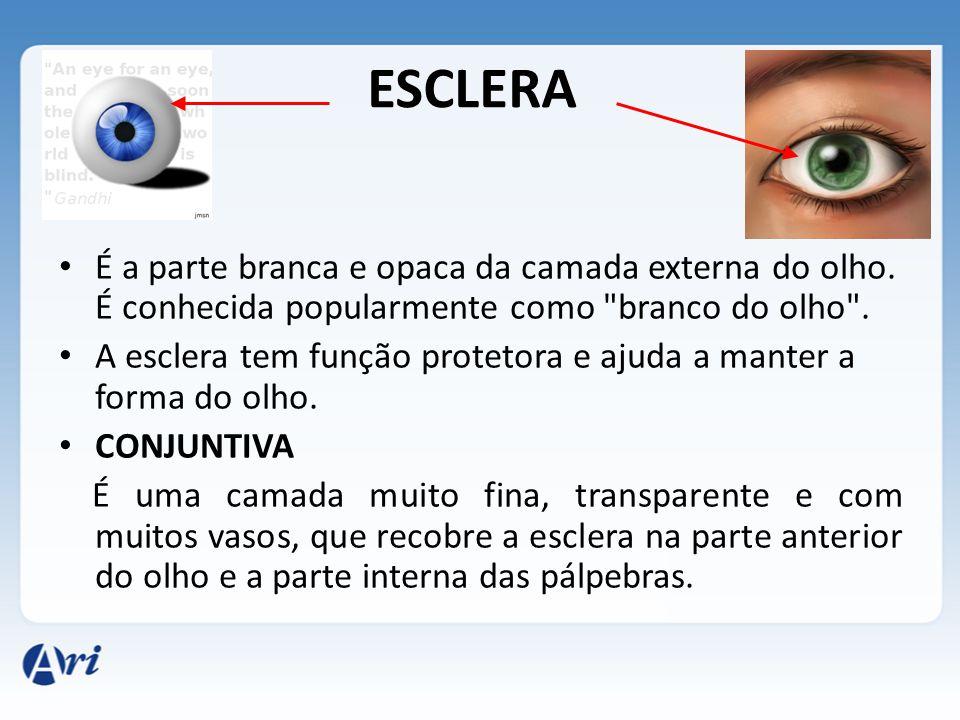 ESCLERA É a parte branca e opaca da camada externa do olho. É conhecida popularmente como