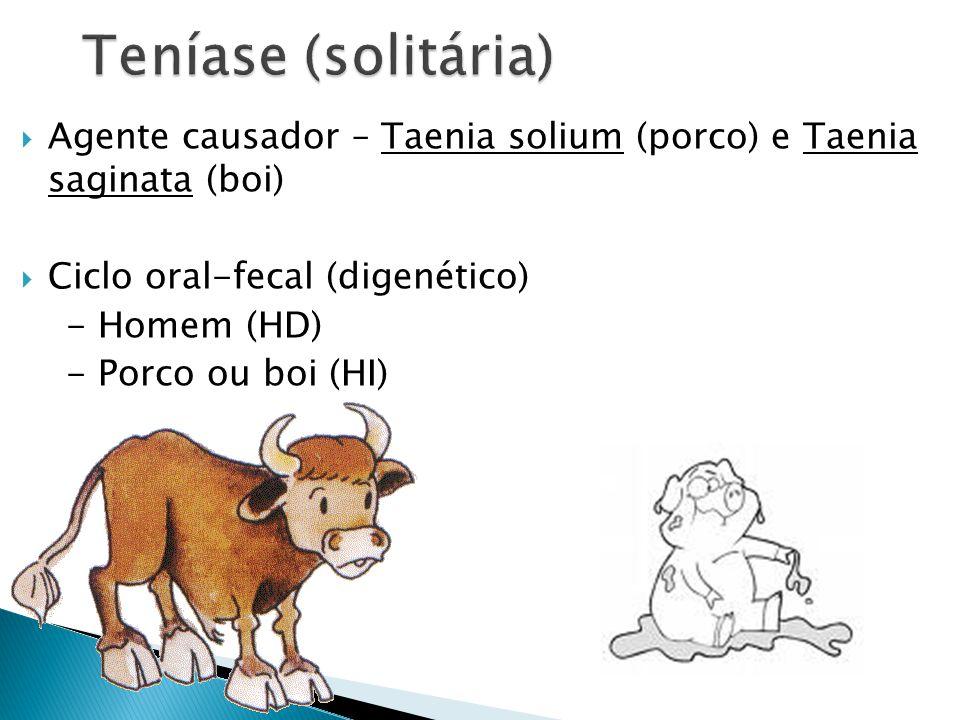 Agente causador – Taenia solium (porco) e Taenia saginata (boi) Ciclo oral-fecal (digenético) - Homem (HD) - Porco ou boi (HI)