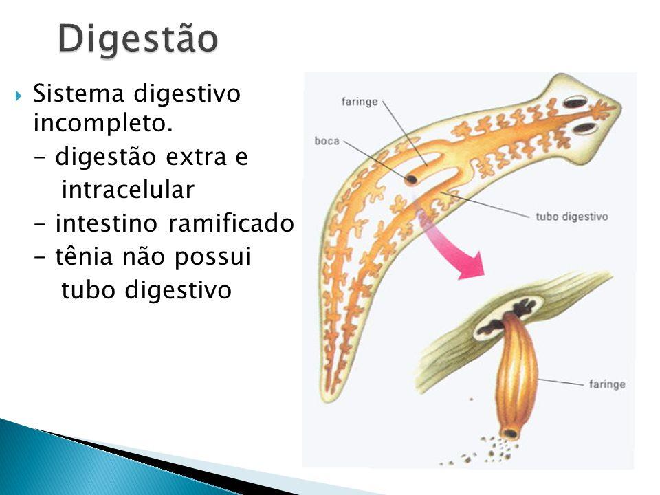 Sistema digestivo incompleto.