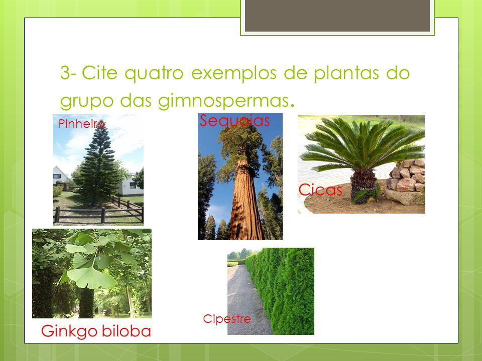 3- Cite quatro exemplos de plantas do grupo das gimnospermas. Ginkgo biloba Pinheiro Sequoias Cicas Cipestre