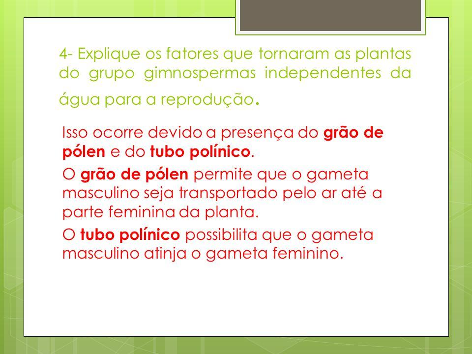 4- Explique os fatores que tornaram as plantas do grupo gimnospermas independentes da água para a reprodução. Isso ocorre devido a presença do grão de