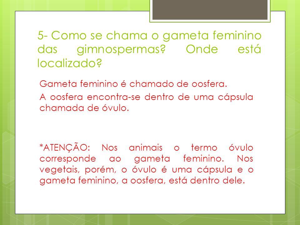 5- Como se chama o gameta feminino das gimnospermas? Onde está localizado? Gameta feminino é chamado de oosfera. A oosfera encontra-se dentro de uma c