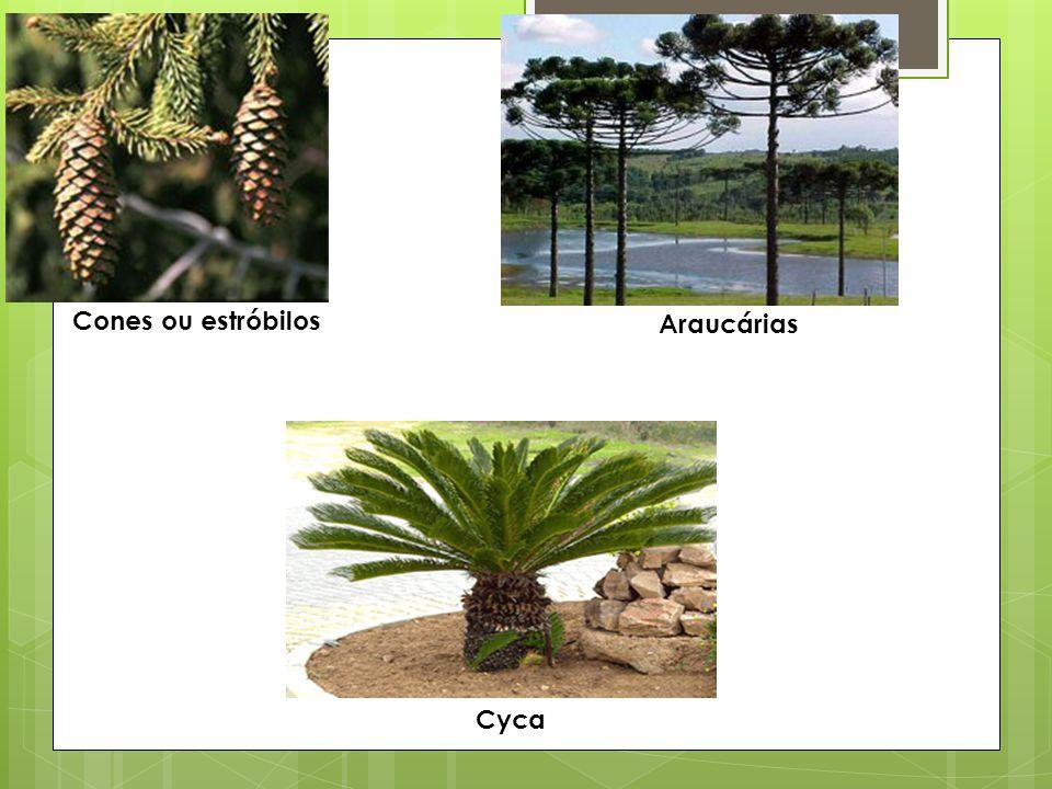 4- Explique os fatores que tornaram as plantas do grupo gimnospermas independentes da água para a reprodução.