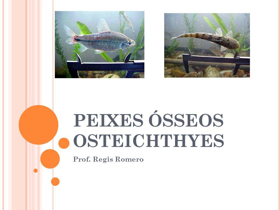 PEIXES ÓSSEOS OSTEICHTHYES Prof. Regis Romero