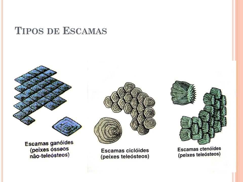 T IPOS DE E SCAMAS