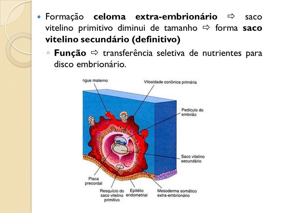 DESENVOLVIMENTO SACO CORIÔNICO Aparecimento de vilosidades coriônicas primárias Proliferação células citotrofoblasto penetram no sinciciotrofoblasto Celoma extra-embrionário dividi o mesoderma extra-embrionário em : Mesoderma somático extra-embrionário – forra o trofoblasto e reveste o âmnio Mesoderma esplâncnico extra-embrionário – envolve saco vitelino