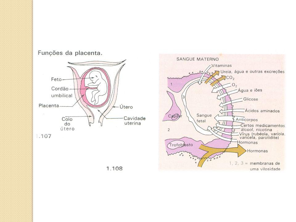 Desenvolvimento fetal 1º mês