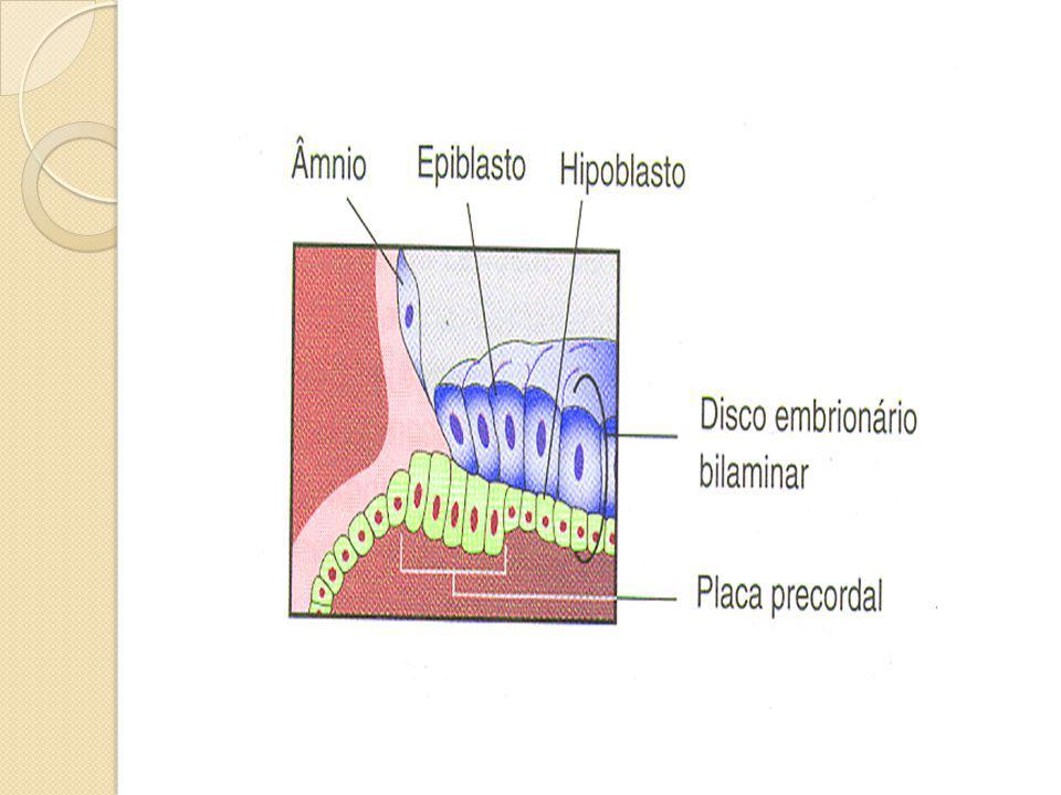 Células endoderma do saco vitelino originam o mesoderma extra-embrionário (tec conjuntivo frouxo) – envolve o âmnio e saco vitelino (mesoderma extra-embrionário)