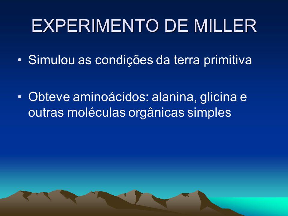 EXPERIMENTO DE MILLER Simulou as condições da terra primitiva Obteve aminoácidos: alanina, glicina e outras moléculas orgânicas simples