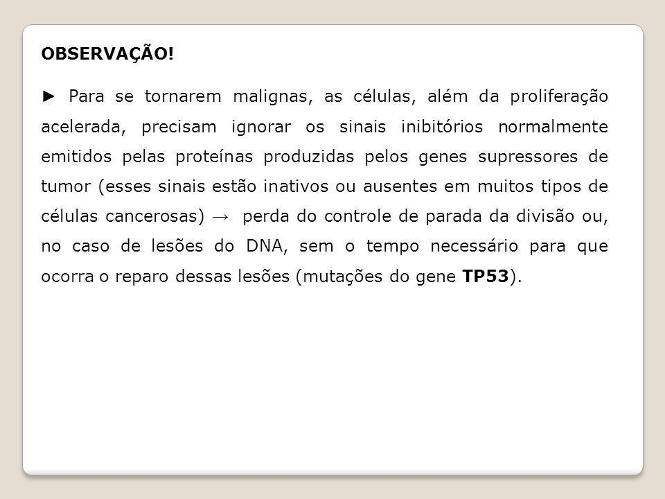 TELÔMEROS Segmentos de DNA situados na extremidade dos cromossomos.