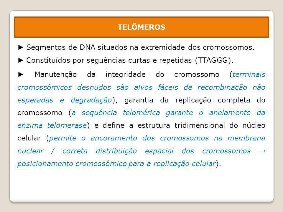 1 – Molécula de DNA com fragmento neoformado com o seu terminal não duplicado.