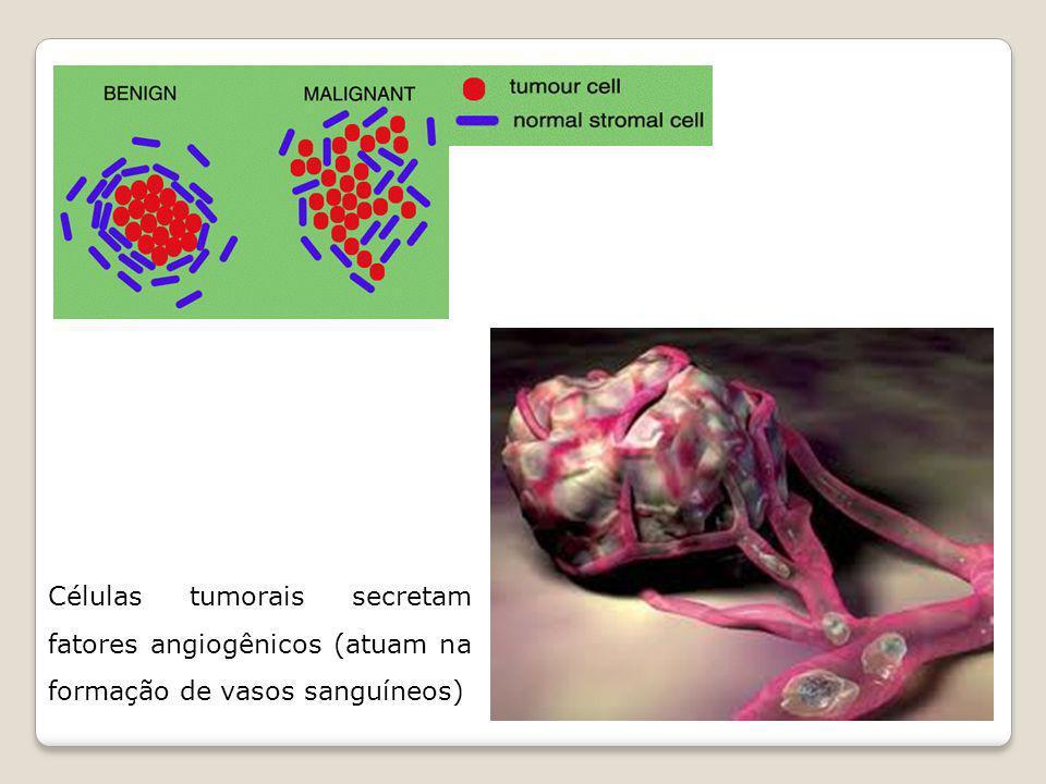 Células tumorais secretam fatores angiogênicos (atuam na formação de vasos sanguíneos)