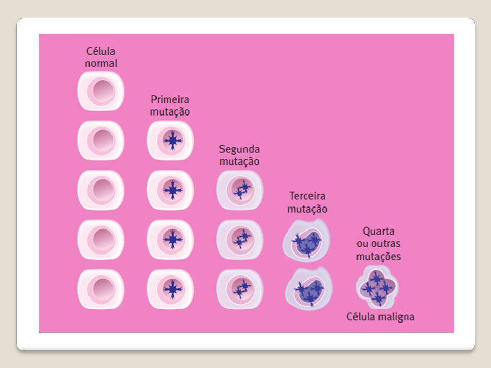 GENES RESPONSÁVEIS PROTOONCOGENES GENES SUPRESSORES DE TUMOR Estimulam a divisão da célula Quando sofrem mutação, passam a ser chamados ONCOGENES Inibem o crescimento celular inapropriado Quando inativados por mutações, deixam de atuar no controle da divisão celular