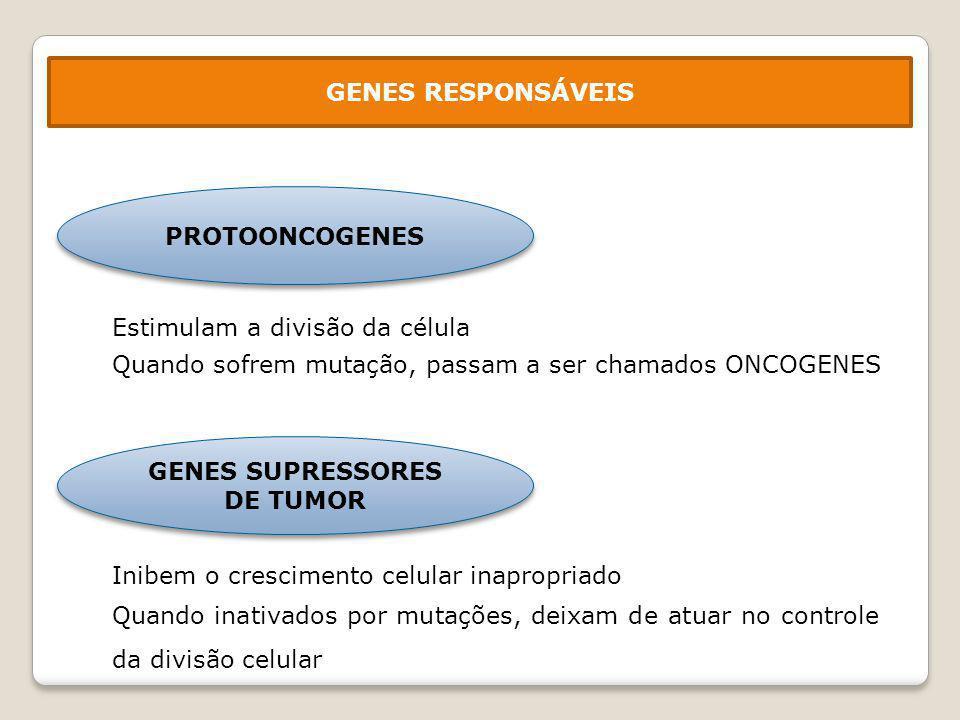 Fator de crescimento Ligação a receptor específico na membrana da célula Ativação de proteínas no citoplasma (cascata de reações) Ativação de proteínas nucleares (fatores de transcrição) Ativação de genes que controlam o ciclo de divisão celular