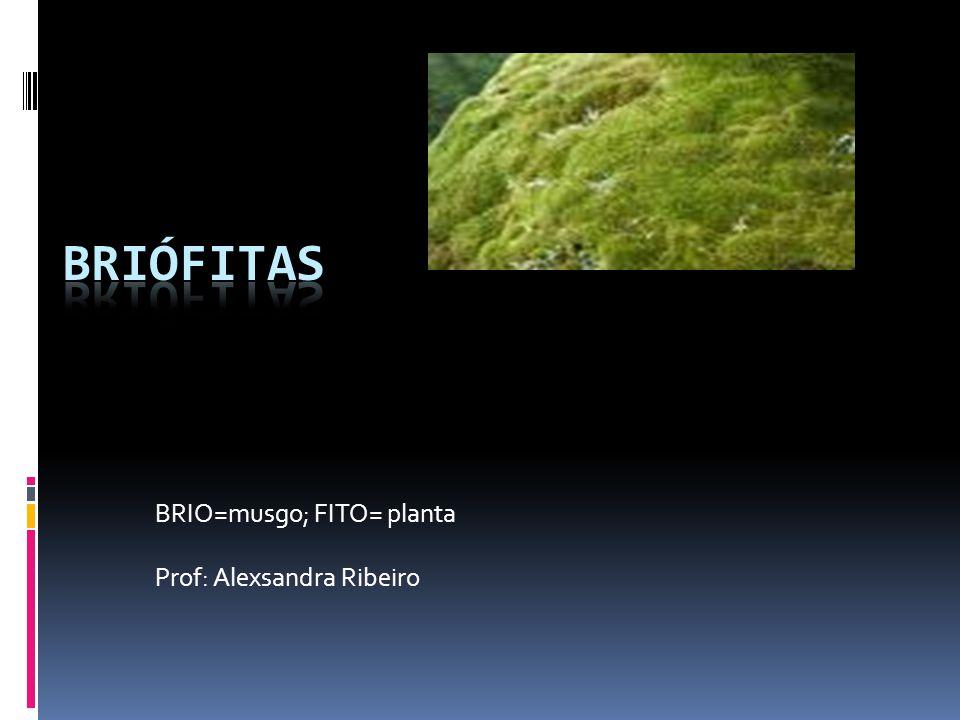 BRIÓFITAS São plantas que apresentam características de transição do ambiente aquático para o terrestre.