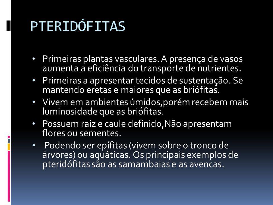 PTERIDÓFITAS Primeiras plantas vasculares.