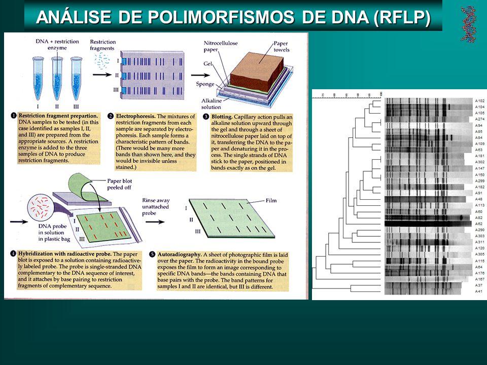ANÁLISE DE POLIMORFISMOS DE DNA (RFLP)