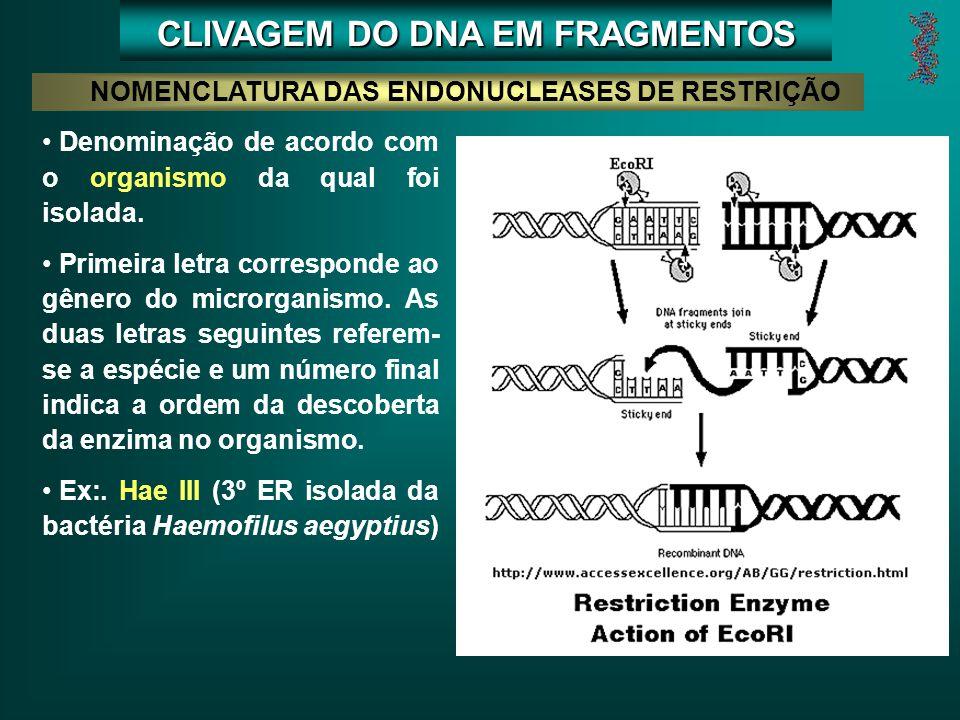 CLIVAGEM DO DNA EM FRAGMENTOS NOMENCLATURA DAS ENDONUCLEASES DE RESTRIÇÃO Denominação de acordo com o organismo da qual foi isolada.