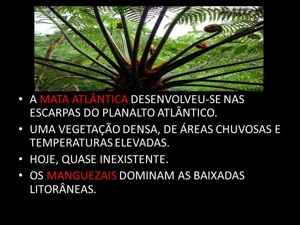 OS RIOS E SUA RELAÇÃO COMO O RELEVO PREDOMÍNIO DE ÁREAS DE PLANALTO: ATLÂNTICO E MERIDIONAL * O ATLÂNTICO É TERRENO CRISTALINO ; E O MERIDIONAL É SEDIMENTAR.