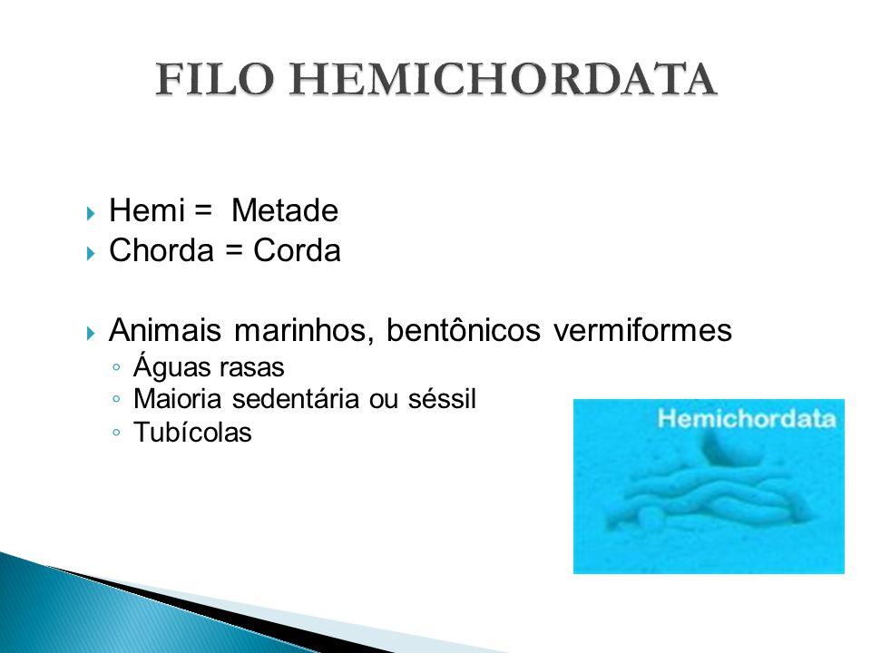 Hemi = Metade Chorda = Corda Animais marinhos, bentônicos vermiformes Águas rasas Maioria sedentária ou séssil Tubícolas