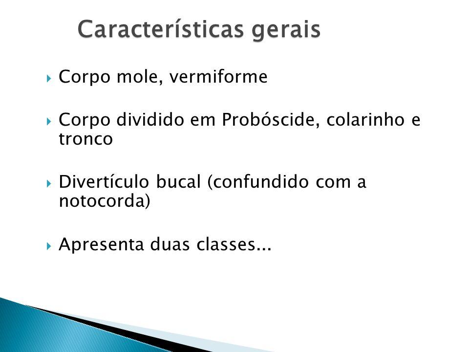 Características gerais Corpo mole, vermiforme Corpo dividido em Probóscide, colarinho e tronco Divertículo bucal (confundido com a notocorda) Apresenta duas classes...