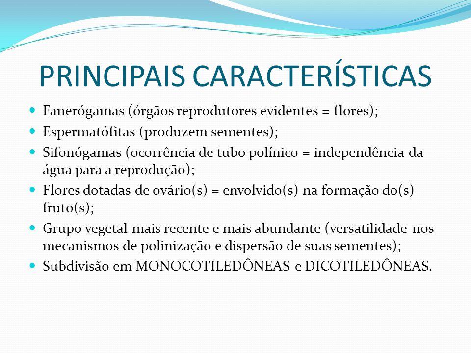 PRINCIPAIS CARACTERÍSTICAS Fanerógamas (órgãos reprodutores evidentes = flores); Espermatófitas (produzem sementes); Sifonógamas (ocorrência de tubo p