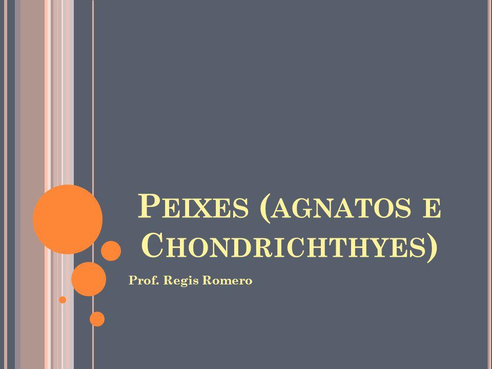P EIXES ( AGNATOS E C HONDRICHTHYES ) Prof. Regis Romero