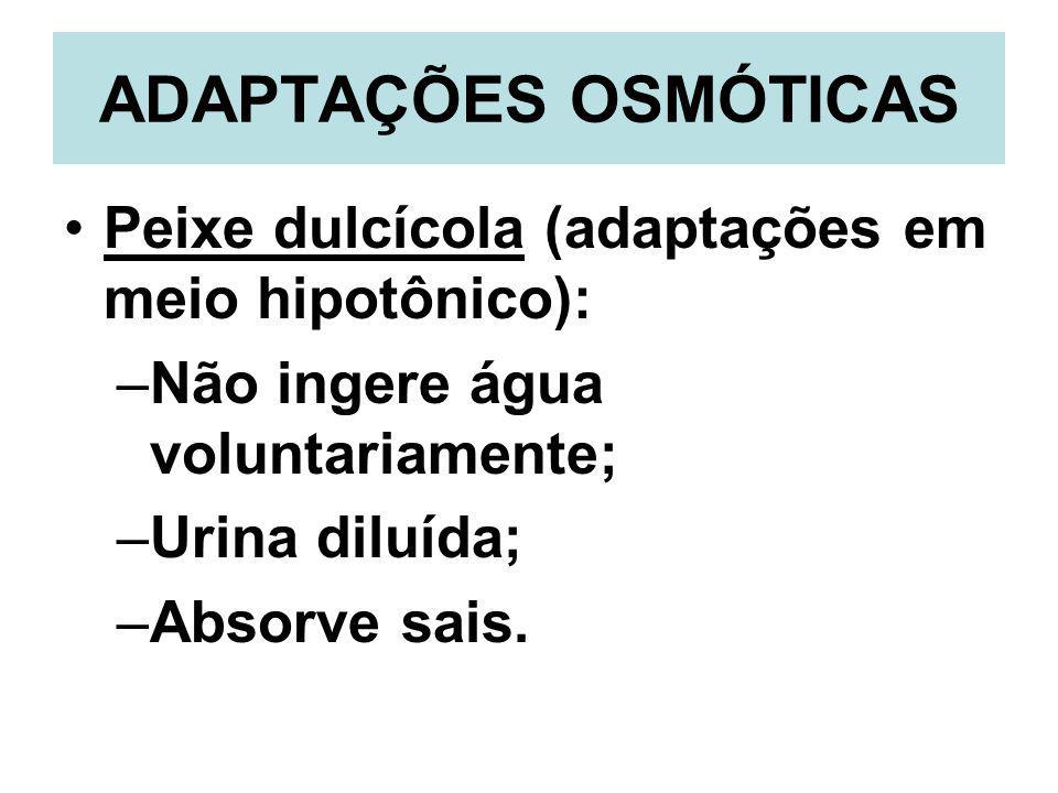 ADAPTAÇÕES OSMÓTICAS Peixe dulcícola (adaptações em meio hipotônico): –Não ingere água voluntariamente; –Urina diluída; –Absorve sais.