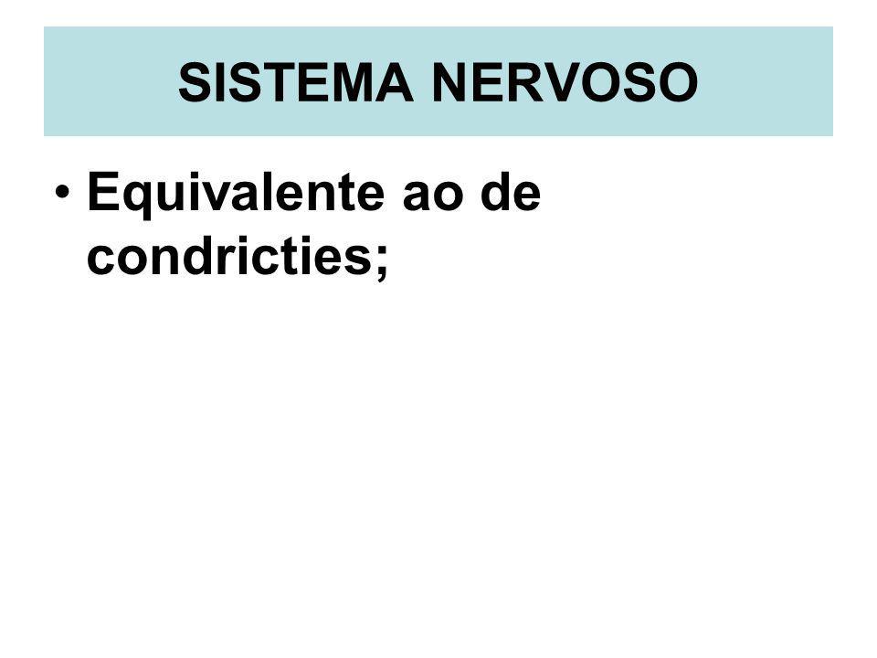 SISTEMA NERVOSO Equivalente ao de condricties;