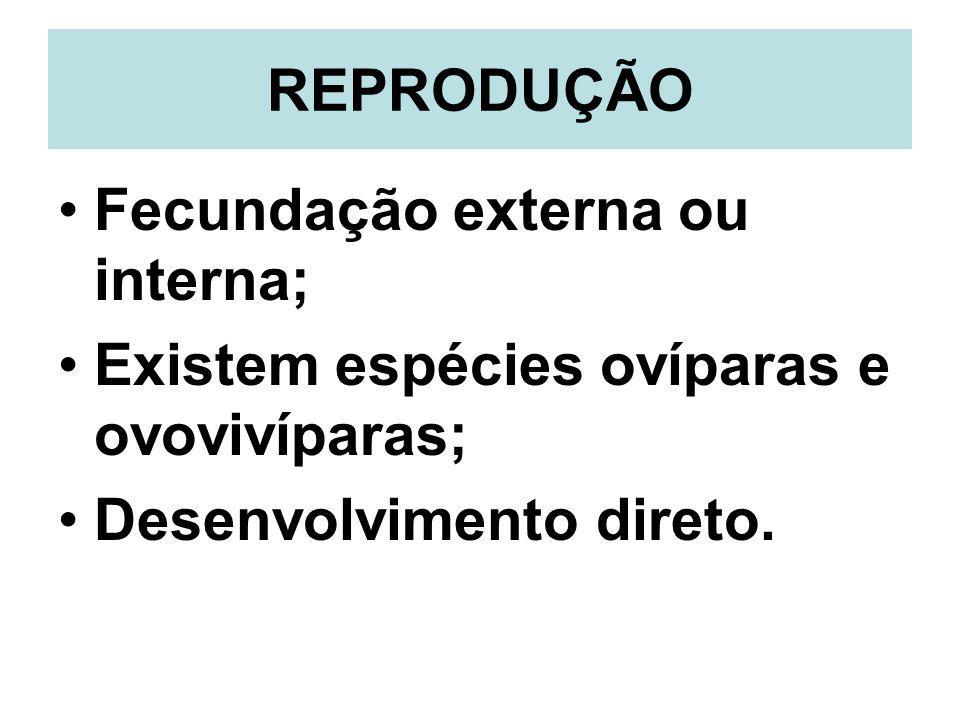 REPRODUÇÃO Fecundação externa ou interna; Existem espécies ovíparas e ovovivíparas; Desenvolvimento direto.