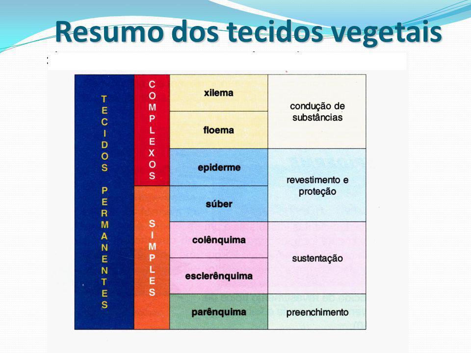 Resumo dos tecidos vegetais