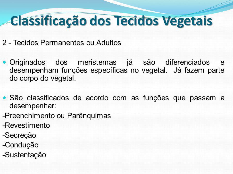 Classificação dos Tecidos Vegetais 2 - Tecidos Permanentes ou Adultos Originados dos meristemas já são diferenciados e desempenham funções específicas
