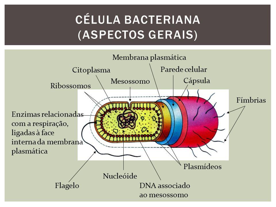 Bactérias e arqueobactérias assemelham-se muito.