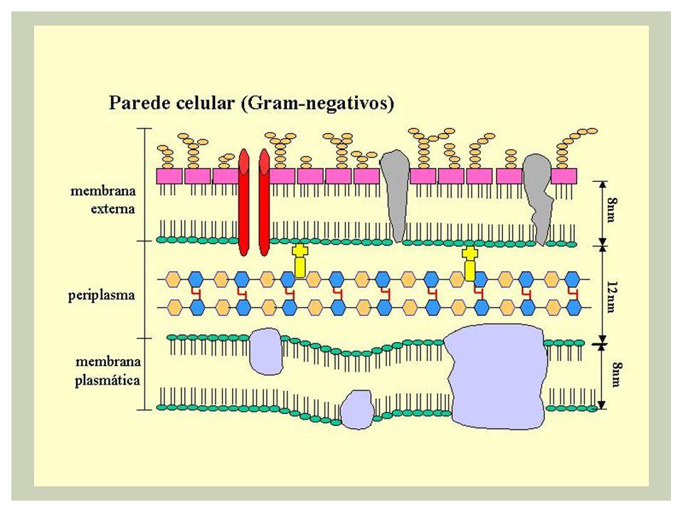 Reprodução bacteriana (Divisão binária /Cissiparidade) Duplicação do DNA Separação das células Parede celular Membrana plasmática Molécula de DNA