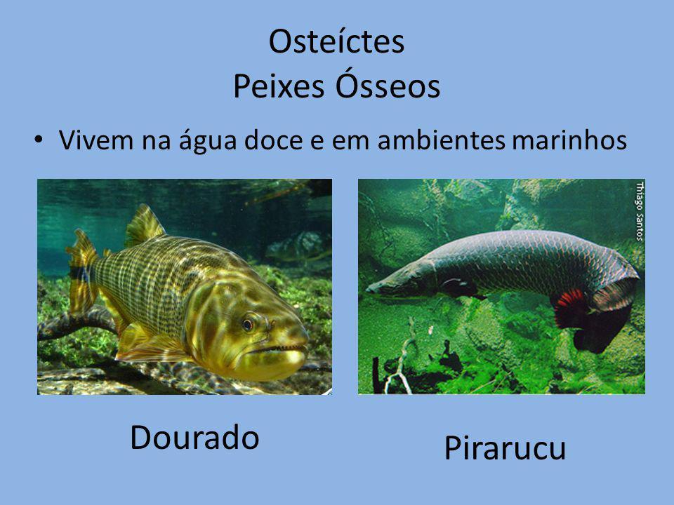 Osteíctes Peixes Ósseos Vivem na água doce e em ambientes marinhos Dourado Pirarucu