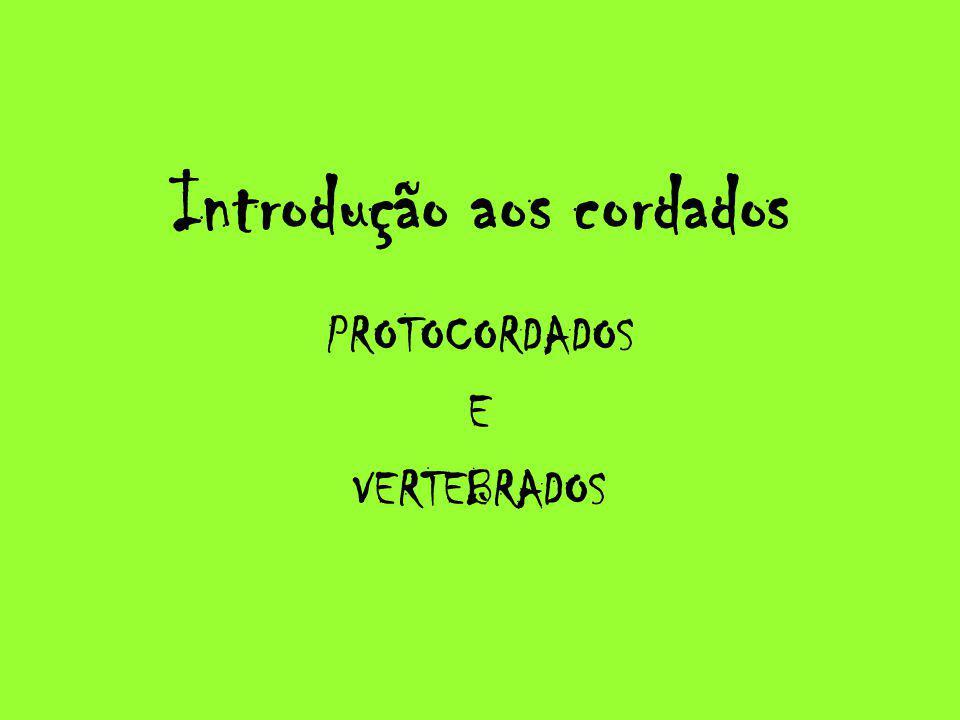Introdução aos cordados PROTOCORDADOS E VERTEBRADOS
